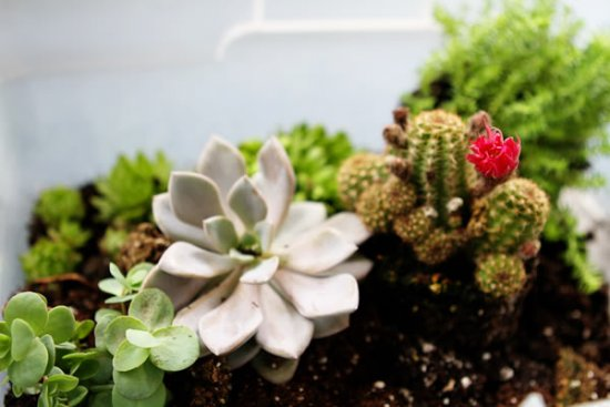 home succulent garden composition