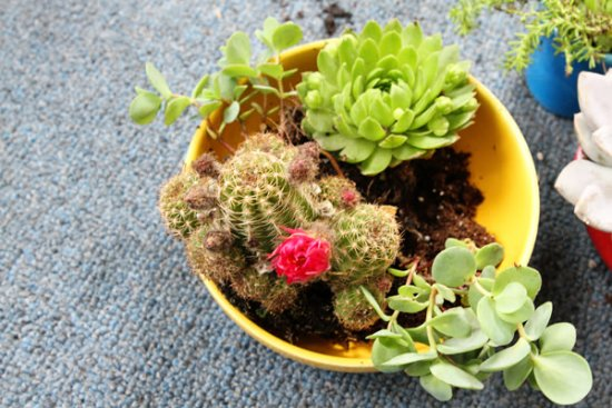 home succulent garden layout