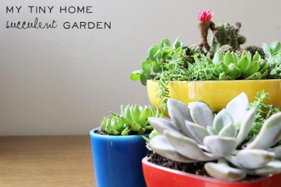 home succulent garden title