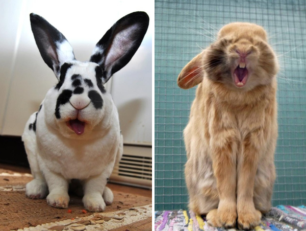yawning bunnies