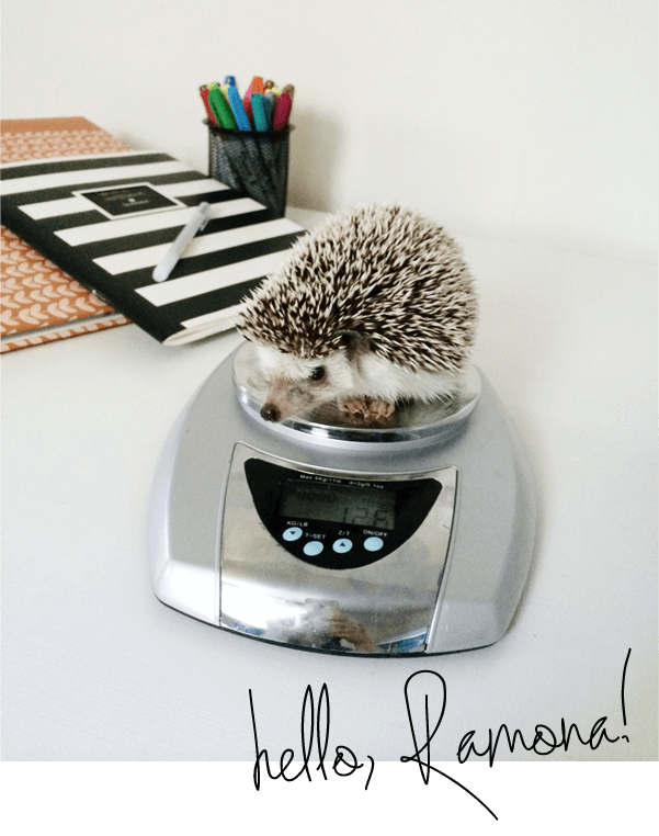 Meet our new Hedgehog family member, because why not.
